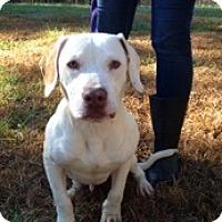 Adopt A Pet :: Drake - Norcross, GA