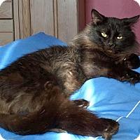 Adopt A Pet :: Dallas - Troy, MI