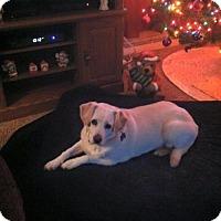 Adopt A Pet :: KC - Kenosha, WI