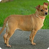 Adopt A Pet :: Miss Kitty - Boston, MA