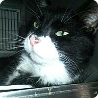 Adopt A Pet :: Handsome - Trevose, PA
