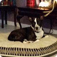 Adopt A Pet :: Harley - Jacksonville Beach, FL