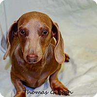Adopt A Pet :: Jack - Oakland Park, FL