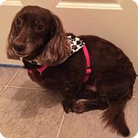 Adopt A Pet :: MOCHA FRAPPACINO (Mocha) - Portland, OR
