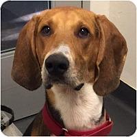 Adopt A Pet :: Trigger - Ithaca, NY