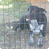 Adopt A Pet :: Buddy - Mexia, TX