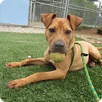 Adopt A Pet :: Irwin - Greensboro, NC