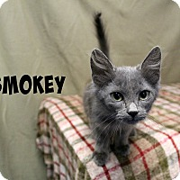 Adopt A Pet :: Smokey - Melbourne, KY