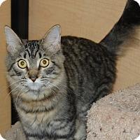 Adopt A Pet :: Yodie - Whittier, CA