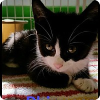 Adopt A Pet :: Phinneas - Bloomingdale, NJ