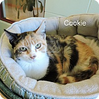Adopt A Pet :: Cookie - Slidell, LA
