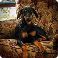 Adopt A Pet :: Jessie - Gilmer, TX