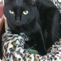 Adopt A Pet :: Candy - Alexis, NC
