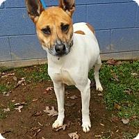 Adopt A Pet :: Jingles - Randleman, NC
