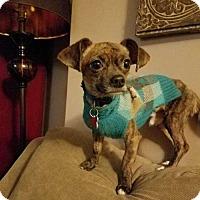 Adopt A Pet :: Tido - Boston, MA
