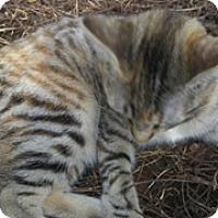 Adopt A Pet :: Louise - Spring, TX