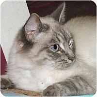 Adopt A Pet :: Camilla - Davis, CA