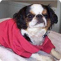 Adopt A Pet :: Marley - Mays Landing, NJ
