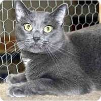 Adopt A Pet :: Maci - Racine, WI