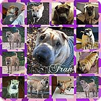 Adopt A Pet :: Fran - ....., FL