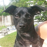 Adopt A Pet :: Junior - Orlando, FL