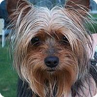 Adopt A Pet :: Shane - Lorain, OH