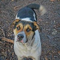 Adopt A Pet :: Misty - Pembroke, GA