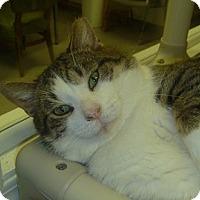 Adopt A Pet :: Moochy - Hamburg, NY