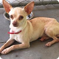 Adopt A Pet :: Tango - Edisto Island, SC