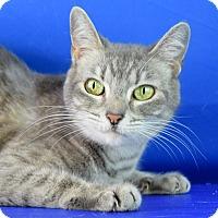 Adopt A Pet :: Leona - Carencro, LA