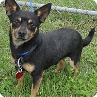 Adopt A Pet :: Hercules - Byhalia, MS
