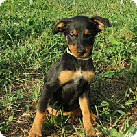 Adopt A Pet :: Elena - Pennigton, NJ