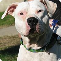 Adopt A Pet :: Syd - New Kensington, PA