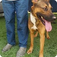 Adopt A Pet :: CHARLOTTE - Gustine, CA