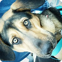 Adopt A Pet :: Lady - Spring, TX
