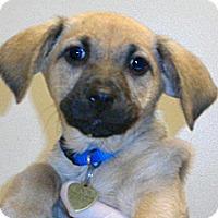 Adopt A Pet :: Low Rider - Wildomar, CA