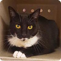 Adopt A Pet :: Prince - Cheltenham, PA
