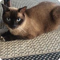 Adopt A Pet :: Kimmie - Boynton Beach, FL