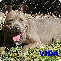 Adopt A Pet :: Vida - Houston, TX