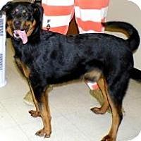 Adopt A Pet :: Simon - Washington Court House, OH