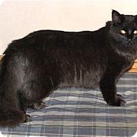 Adopt A Pet :: K-Hodnick4-Miriam - Colorado Springs, CO