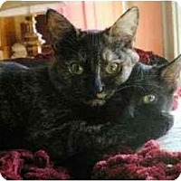 Adopt A Pet :: Miella (with Estella) - Portland, OR
