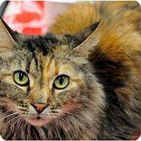 Adopt A Pet :: Maggie Mae - Harrisburg, NC