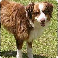 Adopt A Pet :: Casey - Orlando, FL
