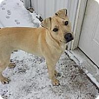 Adopt A Pet :: Bob - Conway, AR