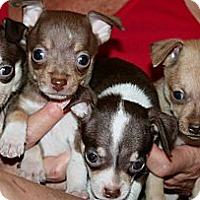 Adopt A Pet :: Spice Girls - Scottsdale, AZ