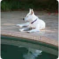 Adopt A Pet :: Elsa - Mesa, AZ
