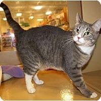 Adopt A Pet :: Jill - Nolensville, TN