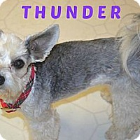 Adopt A Pet :: Thunder - MAIDEN, NC