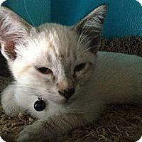 Adopt A Pet :: Ollie - Santa Monica, CA